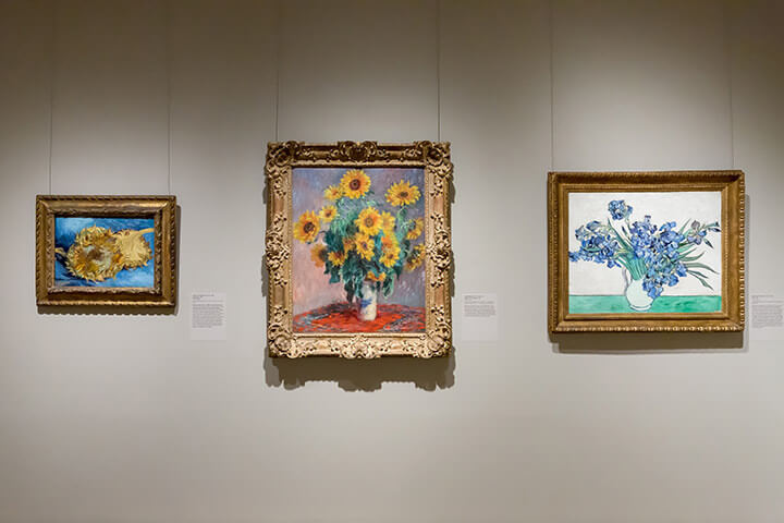 Photo of Monet and Van Gogh's Sunflowers in Museum